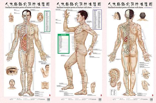 méridiens dans le corps